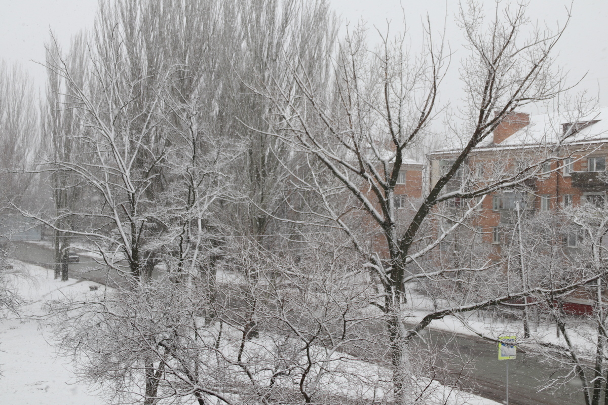 Снег окутал деревья