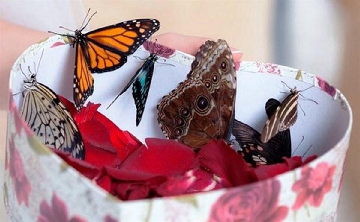Коробка с живыми бабочками