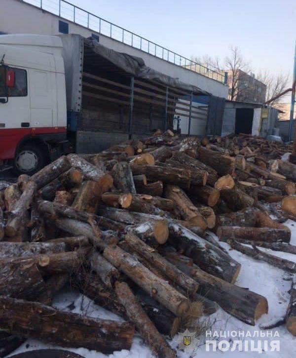 Жители Никополя незаконно срубили более 700 деревьев на сумму 2,5 миллиона гривен