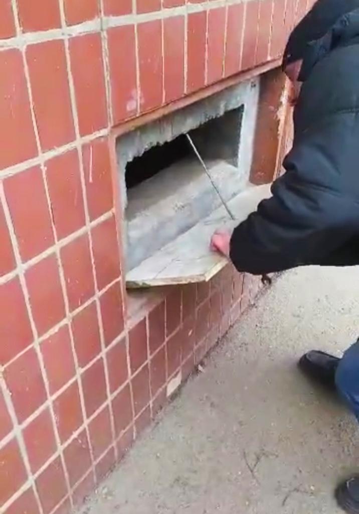 Бедное животное замуровали в подвале жилого дома