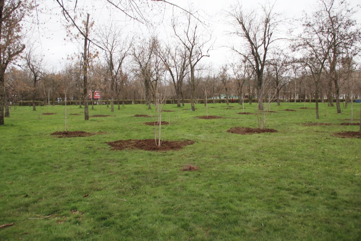 Посадили новые деревья