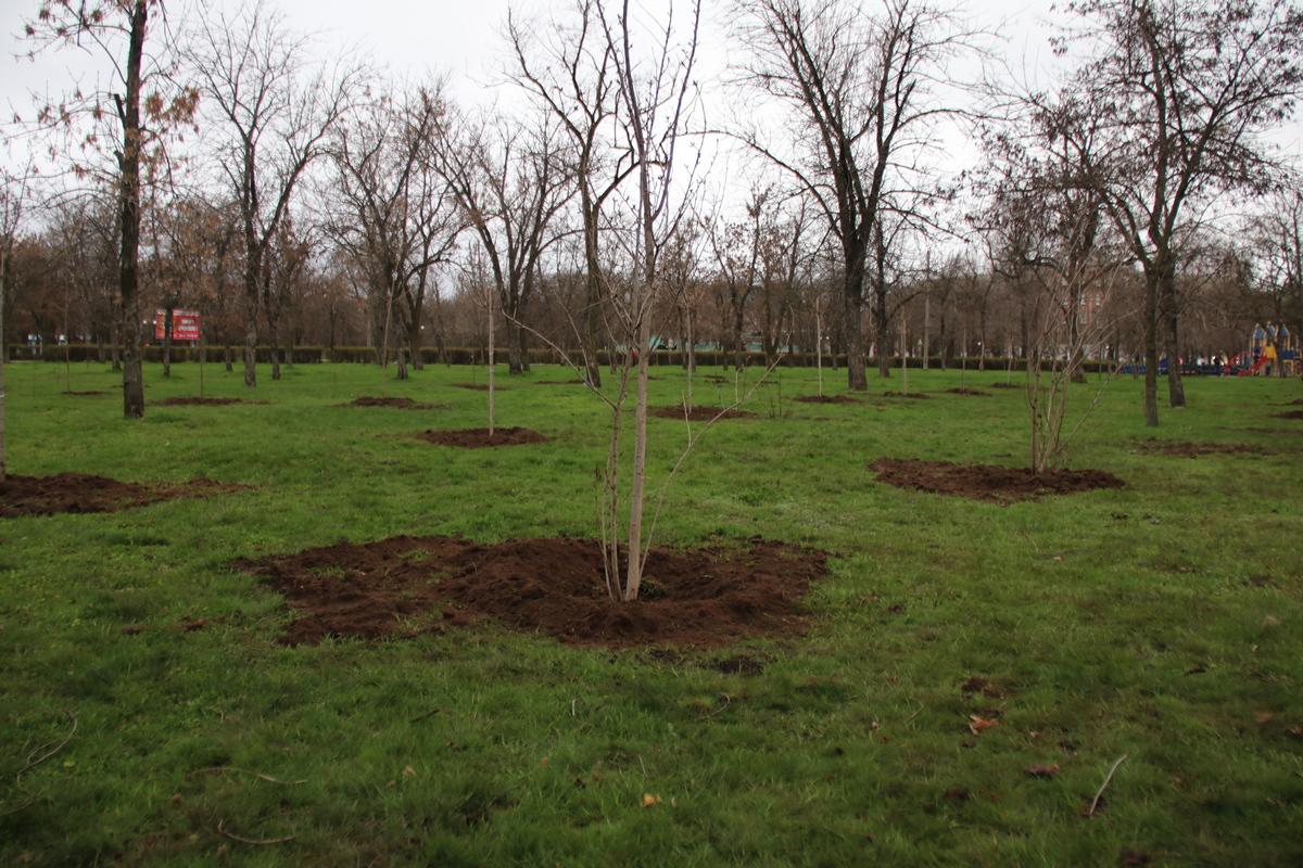 Сквер пополнился новыми деревьями