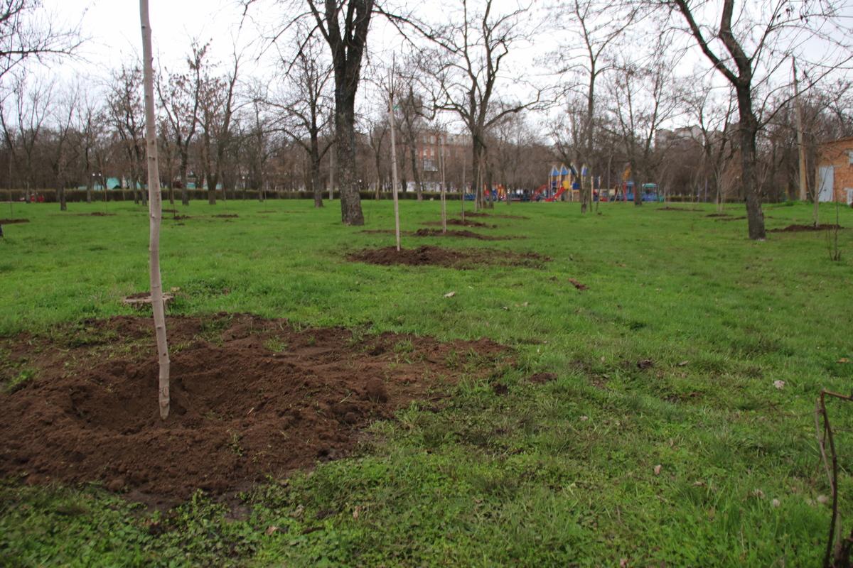 Десятки новых деревьев в сквере