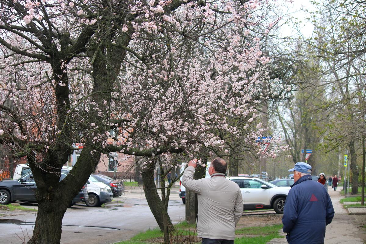 Радостная встреча весны