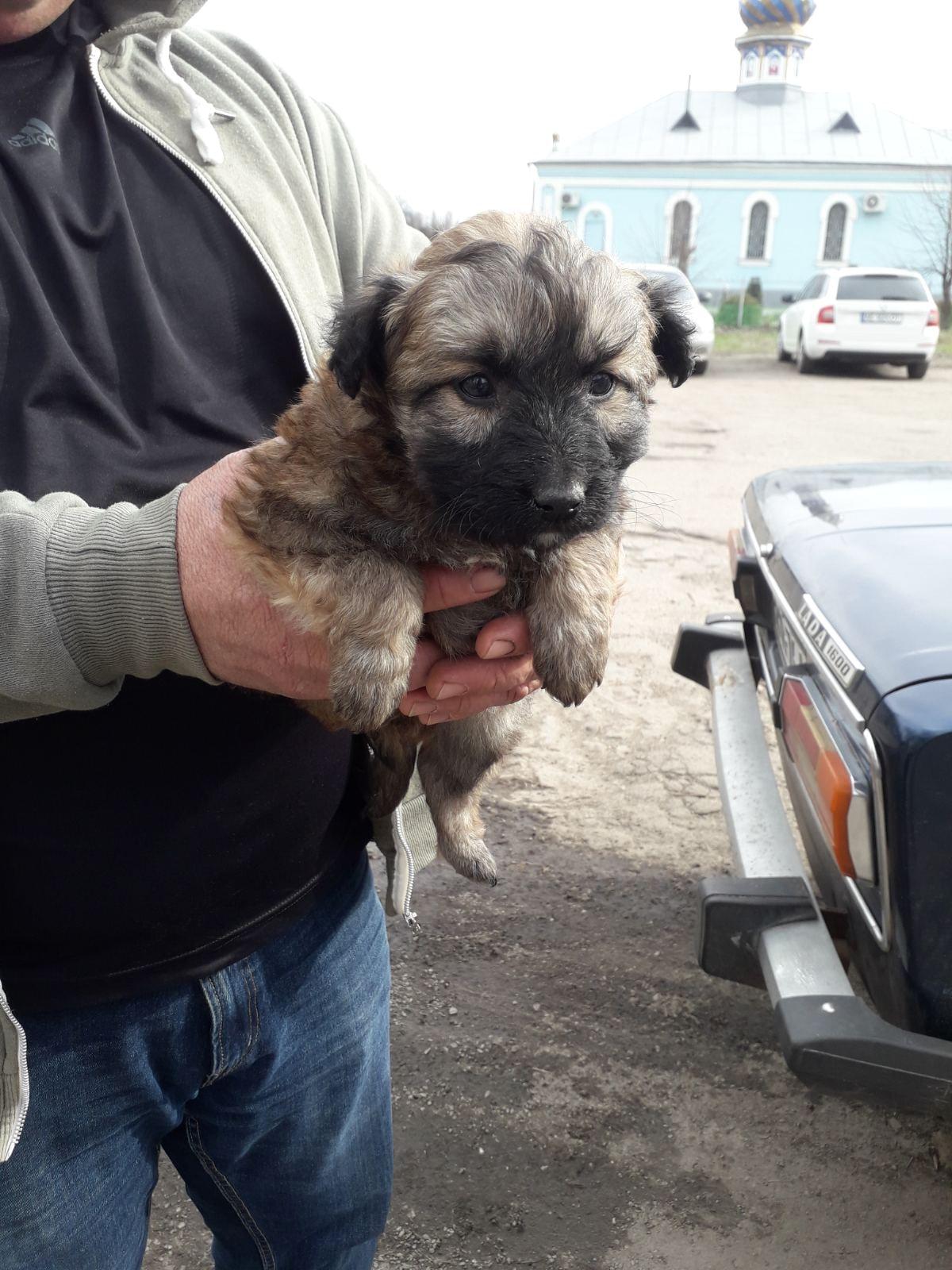 За одну неделю 27 щенковстали домашними любимцами