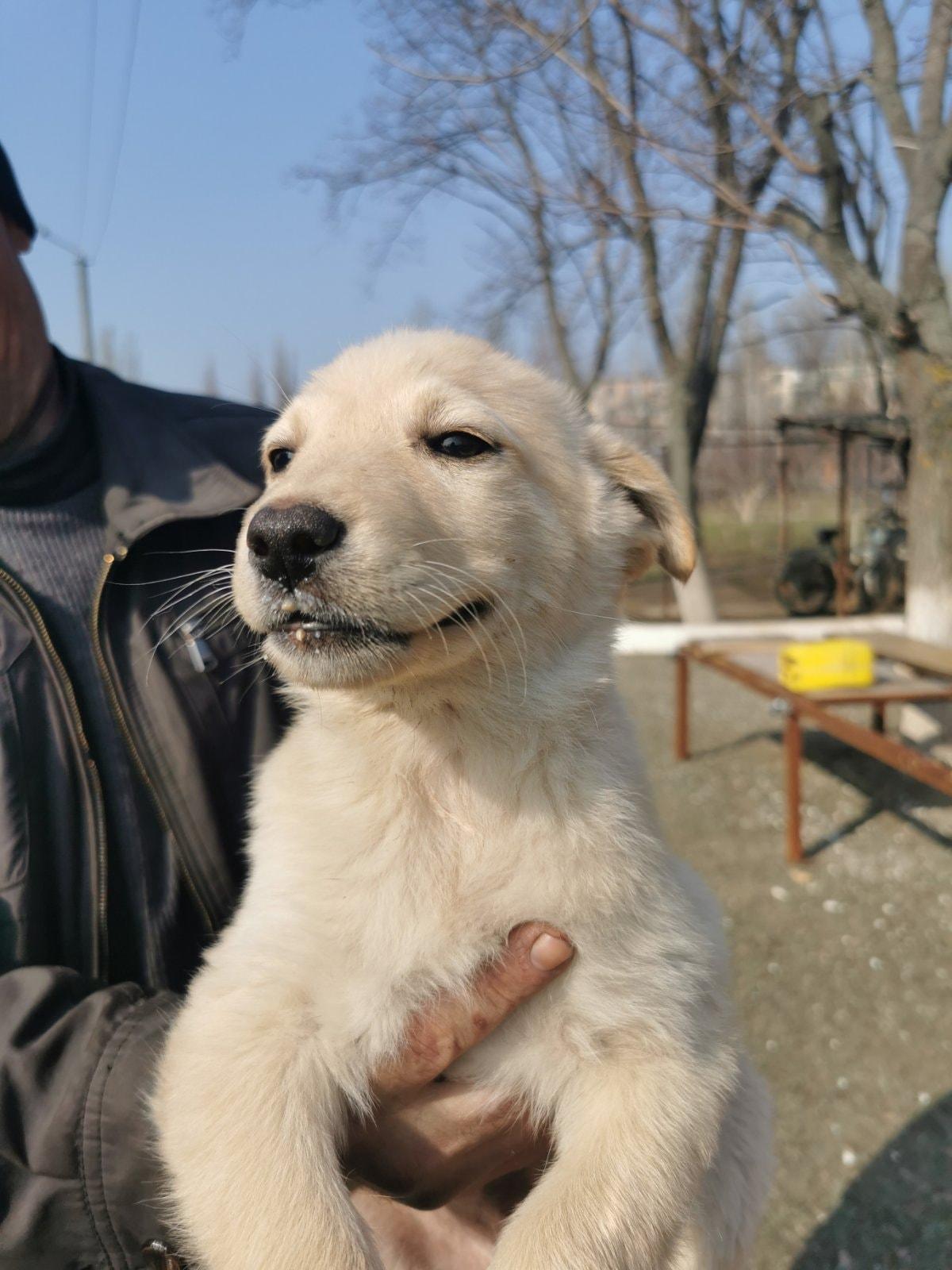 Радостный пес