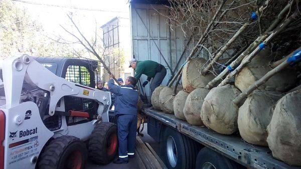 В Никополе закупили саженцы деревьев и кустов