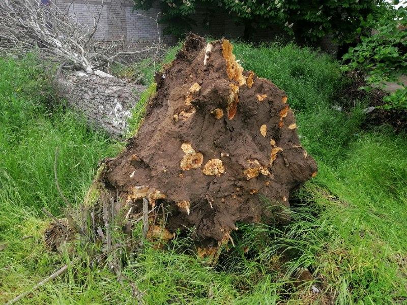 Ветер вывернул дерево с корнями из земли
