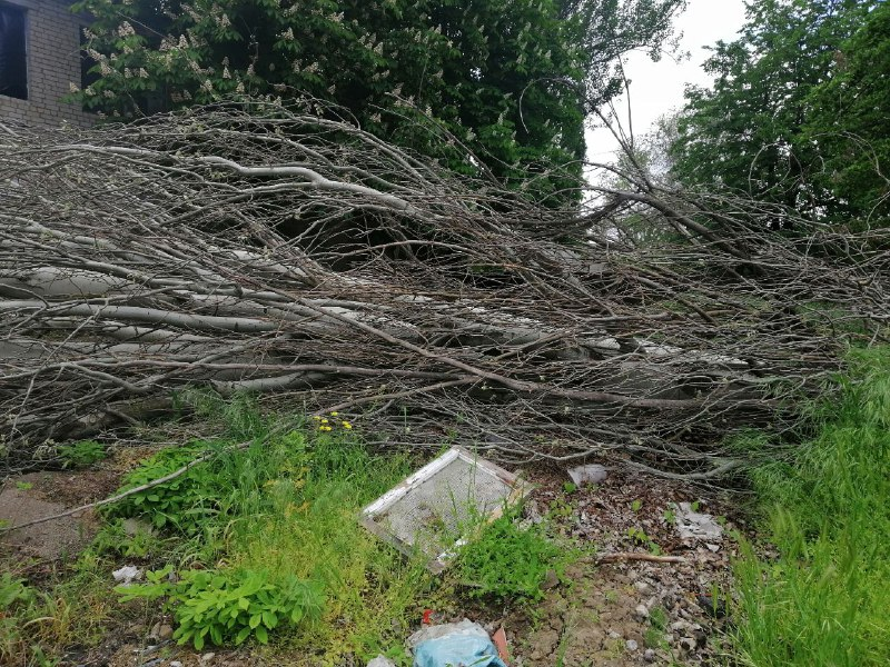 Аварийное дерево не выдержало непогоды