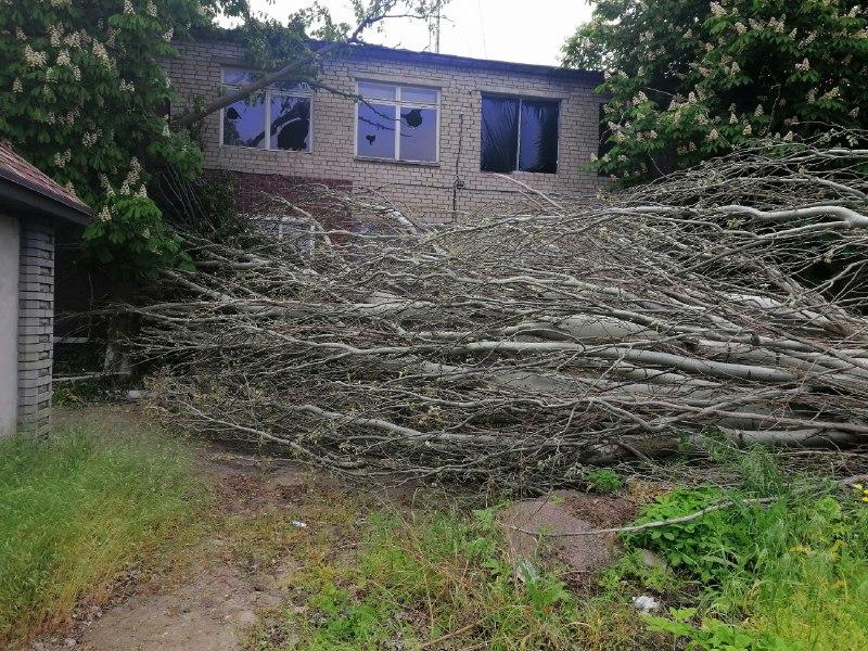 Упавшее дерево лежит на улице Гагарина