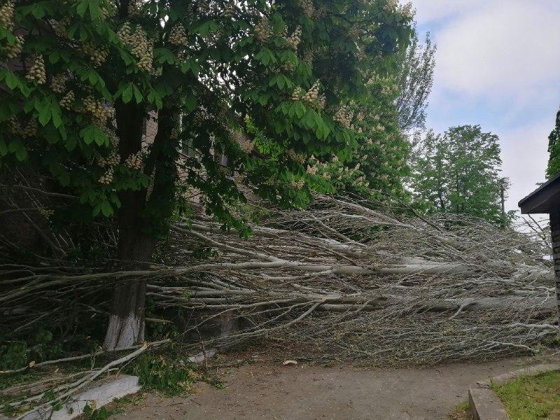 Массивный тополь сверг ураган