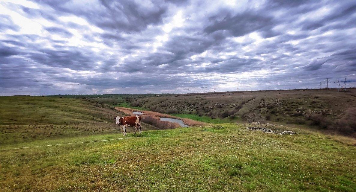 На лугу пасутся коровы