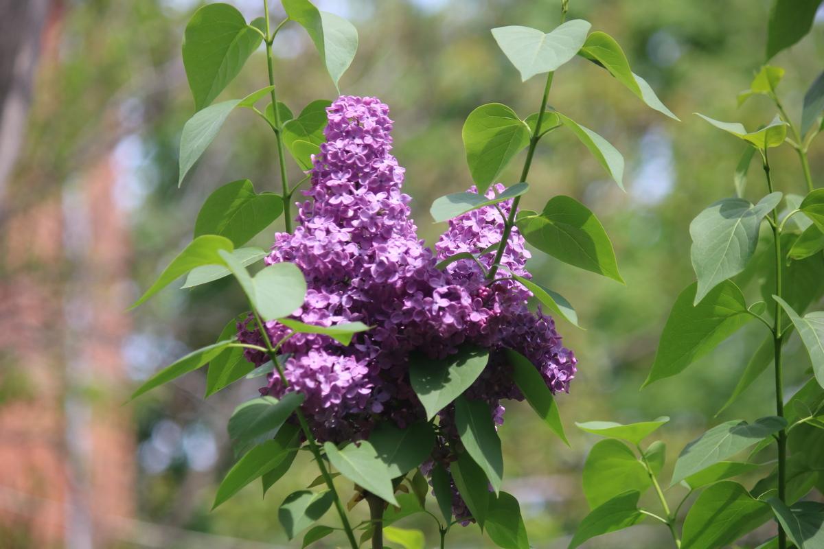Сладкий запах цветов