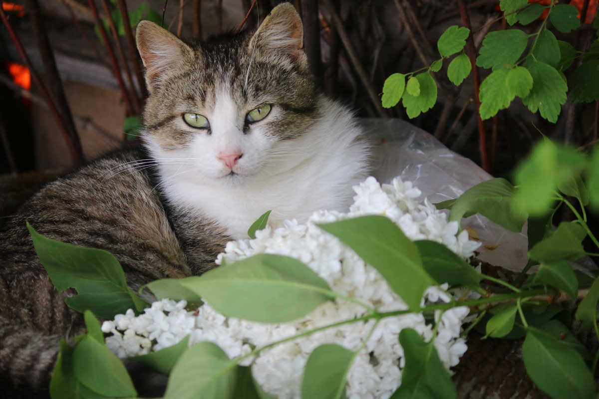 Котики тоже любят цветочки