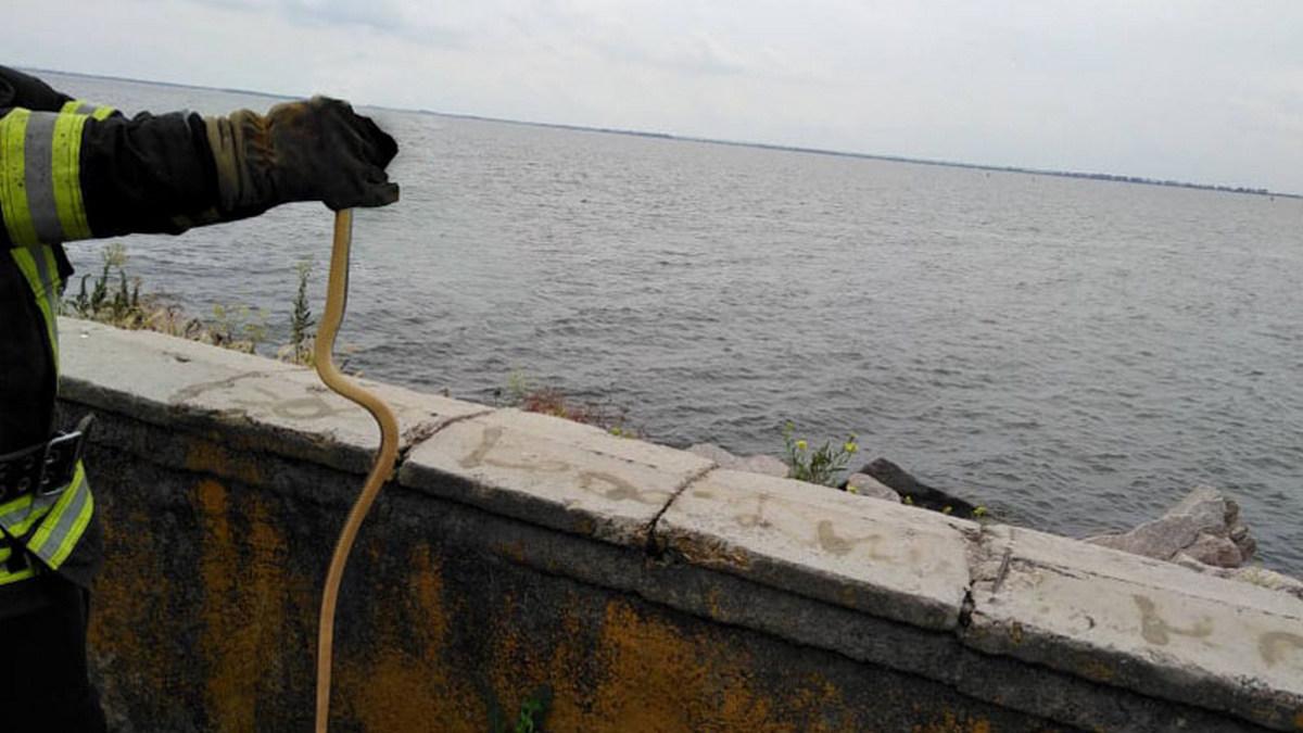 В Никополе заползла змея в кабинет учебного заведения , фото-1