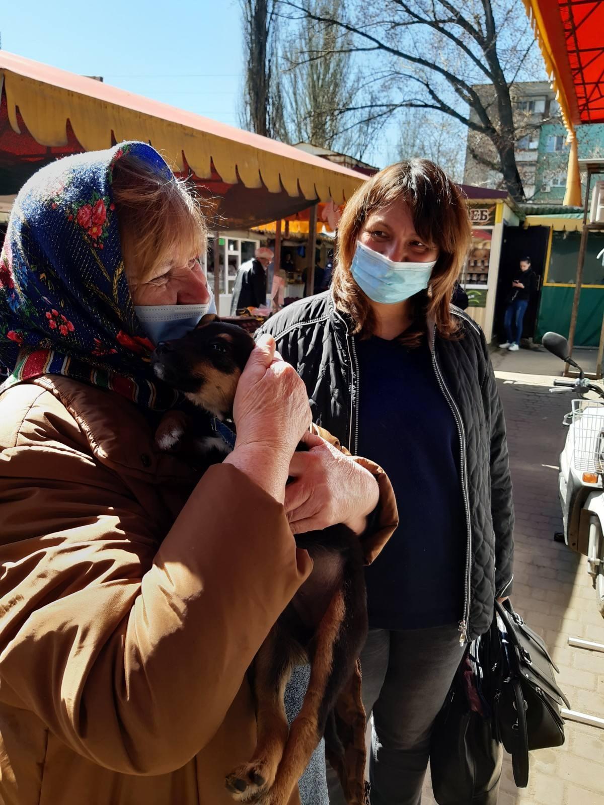 За месяц волонтеры нашли семьи для 80 бездомных собак