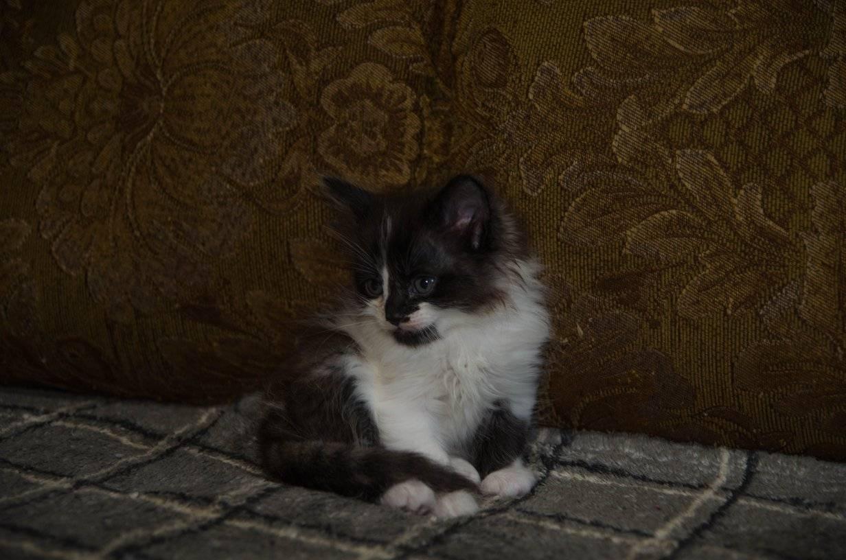 Милый двухцветный котик