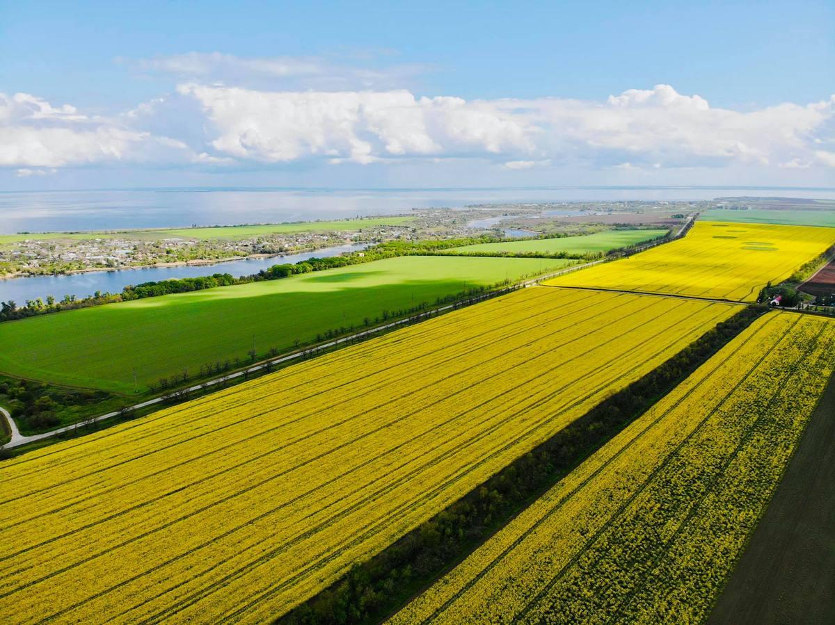 Желтый и зеленый - отличное сочетание цветов