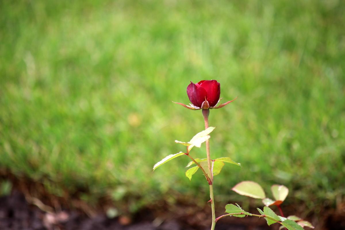 Молодые саженцыначинают цвести