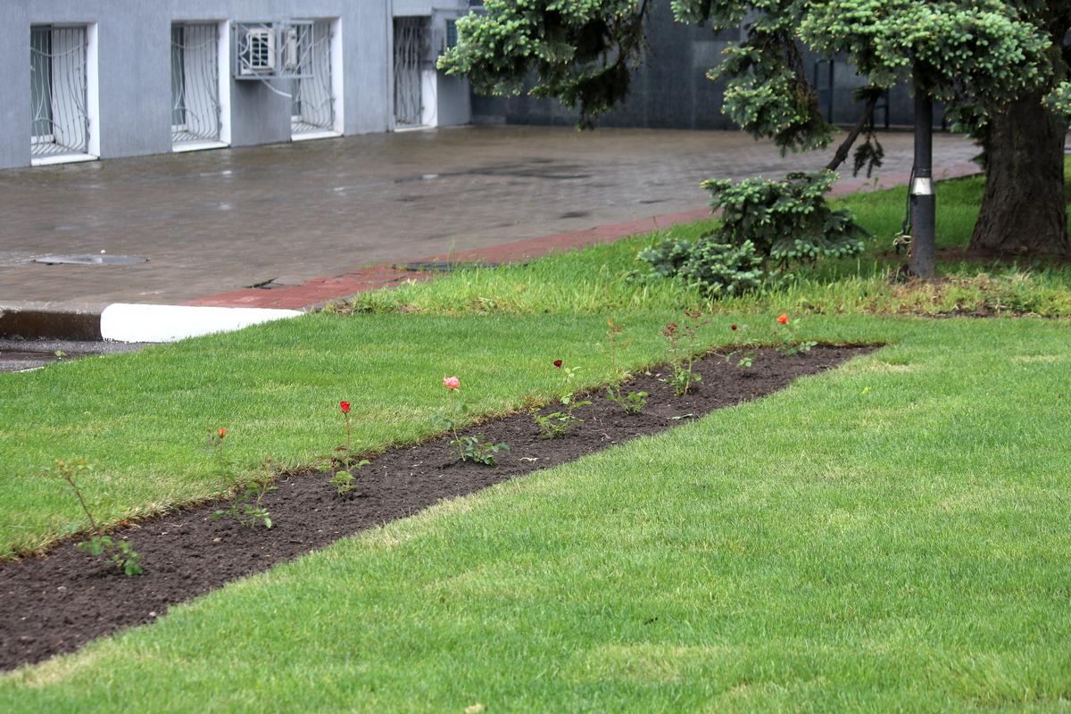 В Никополе возле мэрии постелили рулонный газон