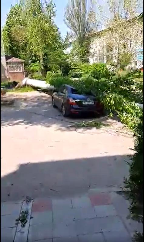 Дерево тополь упало на автомобиль Geely