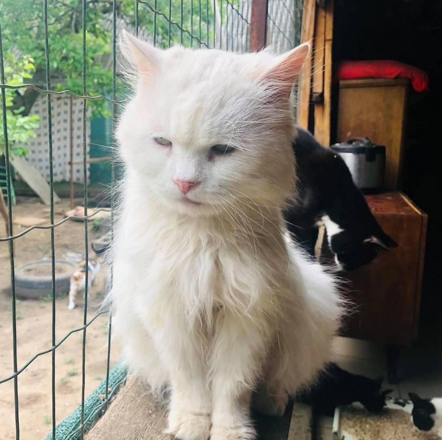 Белоснежный кот Вайтик ищет семью