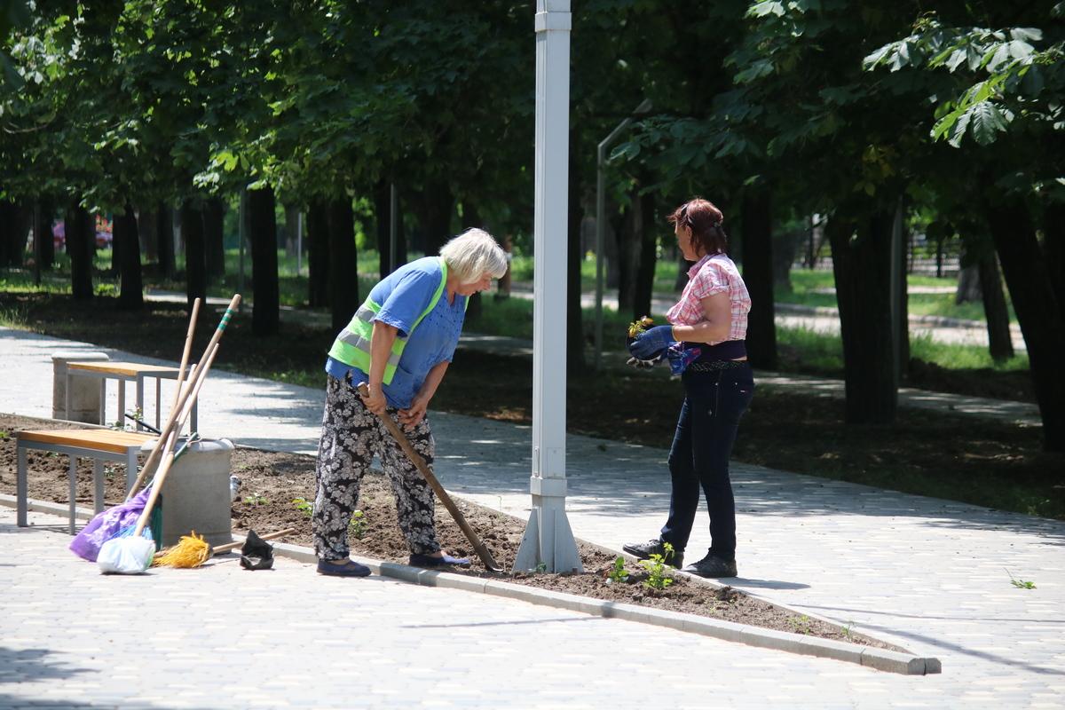 15 июня в Никополе на аллее по улице Каштанавой высадили розы
