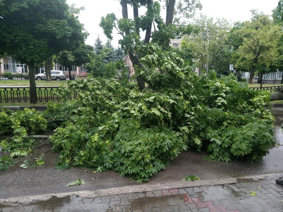 В Никополе на проезжую часть упало дерево