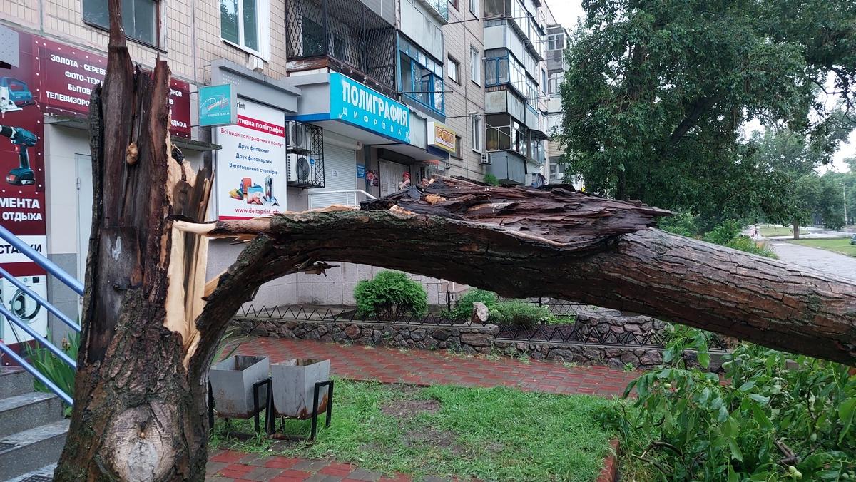 В Никополе на улице Шевченко на автомобиль упало дерево