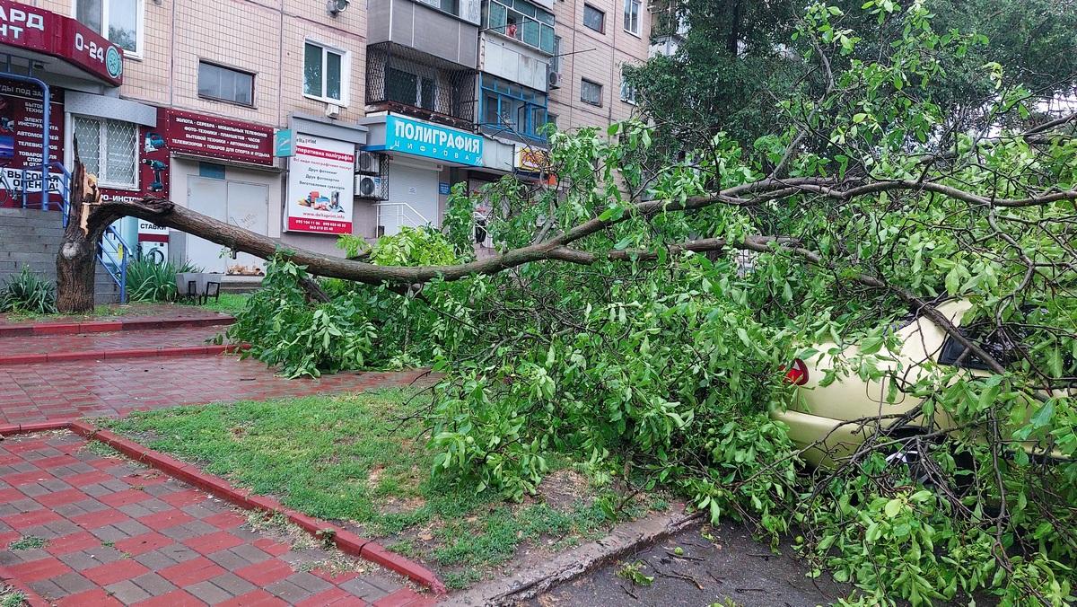 В Никополе на автомобиль упало дерево