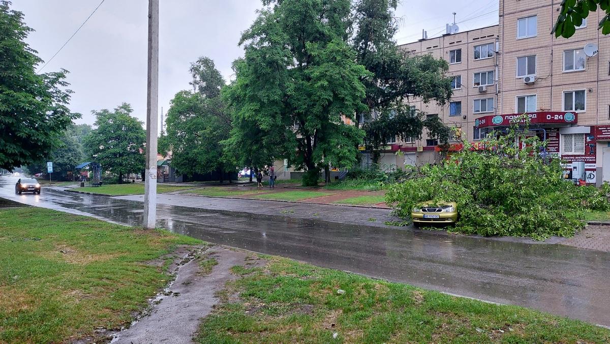Никополе на улице Шевченко на автомобиль упало дерево