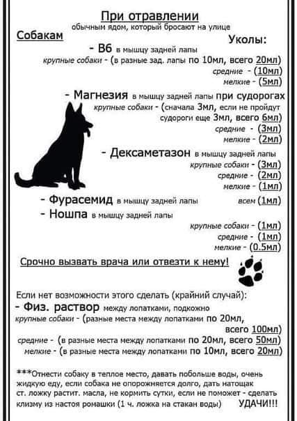 В Никополе отравили котов на улице Добролюбова, фото-2