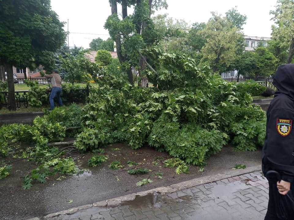 Зеленое дерево завались на дорогу