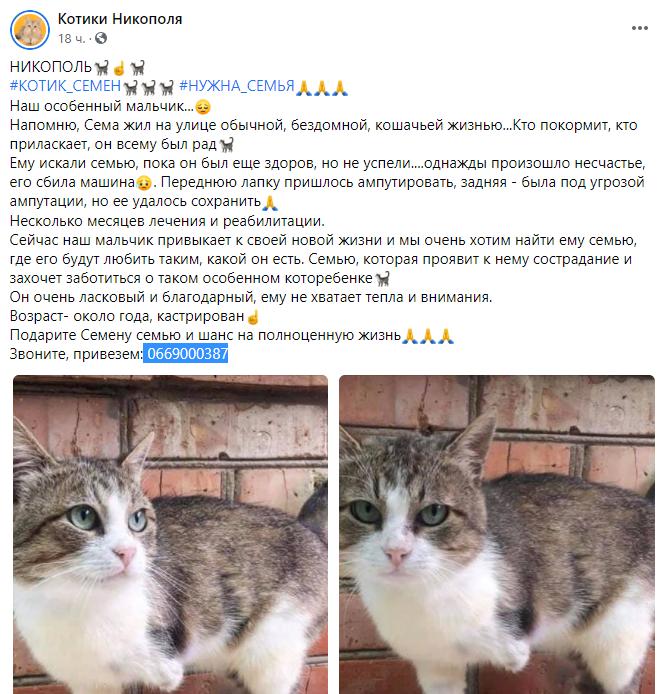 В Никополе любящую семью ищет кот без одной лапки , фото-2