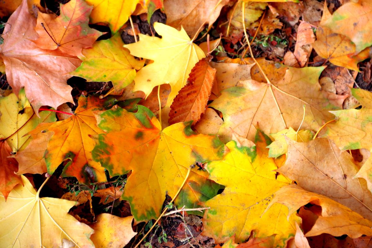 Осень — время размышлений о жизни
