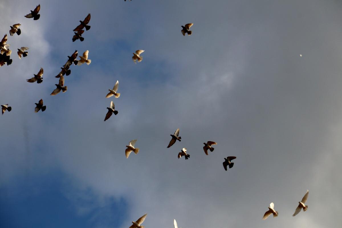 35 голубей выпущенных в небо